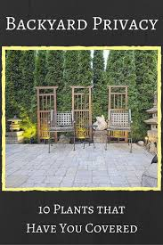 Backyard Landscaping Ideas For Privacy by The Best 10 Plants To Grow For Backyard Privacy Backyard Privacy