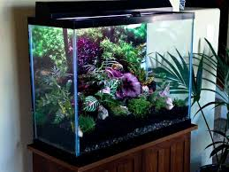 7 best fish tank terrarium images on pinterest aquariums diy fish