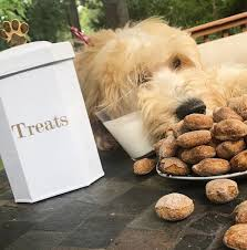 goldendoodle puppy treats sweet potato treats for your favorite s a for