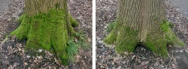 file moss on a tree trunk as an indicator of direction jpg