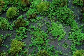 moss and how to grow moss moss and gardens