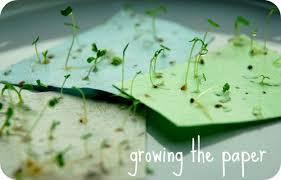 plantable paper seed paper plantable seed paper bommasandra bengaluru the