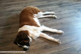 ac rating for laminate flooring