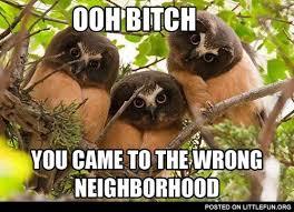Angry Sloth Meme - littlefun angry owls