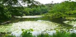japanese zen gardens zen garden 侘び寂びの