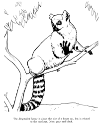 ring tailed lemur drawing coloring madagascar party