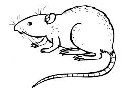 coloring page of a rat rat coloring page animals town free rat color sheet