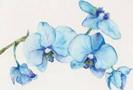 blue orchids blue orchids flowers drawings pictures drawings ideas for kids