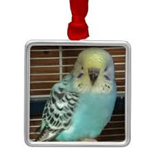 budgie ornaments keepsake ornaments zazzle