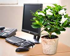 plant for office send a plant instead plant gifts that keep on living