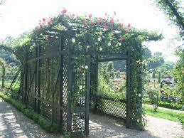 trellises and climbing plants vines