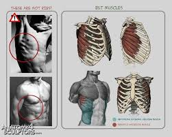 Human Anatomy Reference 43 Best Body Anatomy And Topology Images On Pinterest Anatomy