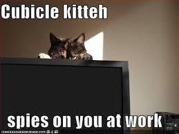 Cubicle Meme - cubicle com home facebook