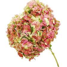 wholesale hydrangeas wholesale hydrangea flowers