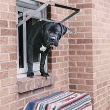 Interior Cat Door With Flap by Endura Flap Thermo Sash 3e Window Cat Door U0026 Dog Door