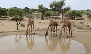 thar desert location how climate change has endangered thar u0027s livestock