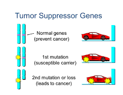 lecture 1 molecular basis of cancer ppt video online download