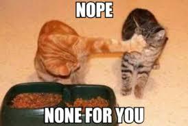 Selfish Meme - selfish cat meme by becky99 memedroid
