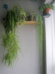 Cascading Indoor Plants by Houseplants To Fill A Tall Space U2026 Green Indoor Plants Tropical