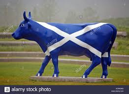 a fake cow painted in the colours of the scottish flag cowparade