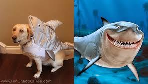 Dog Shark Halloween Costume Diy Finding Nemo Costumes 6 Tricks Halloween