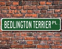 bedlington terrier stud bedlington terrier etsy