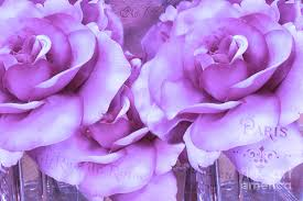 lavender roses dreamy shabby chic purple lavender roses dreamy lavender