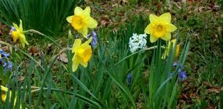 understanding the types of bulbs in your garden today u0027s homeowner