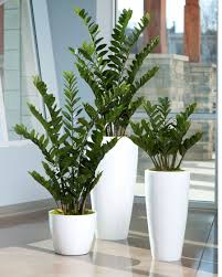 Fake Plants For Home Decor 4 U0027 Zz Silk Plant Silk Plants Plants And Silk
