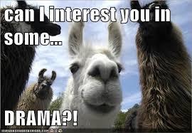 Llama Meme - animal capshunz drama llama funny animal pictures with captions