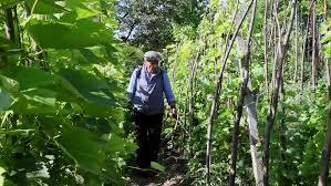 farmer destroying pests spraying pesticides on vegetable garden