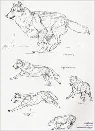 pin by asude aksü güven on undecided tattoos pinterest wolf