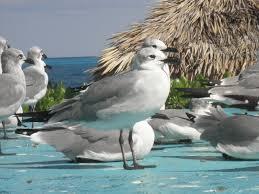 birds beach gull seagull ocean animals in the wild animal