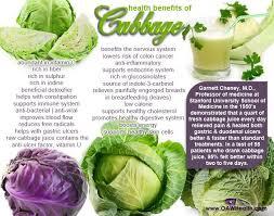 best 25 benefits of cabbage ideas on pinterest cabbage benefits