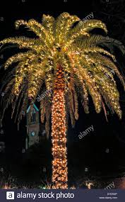 palm tree covered in lights for in historic marion