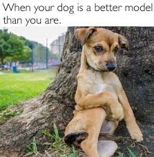 Sexy Dog Meme - funny animal picture dump of the day 24 pics funny animals