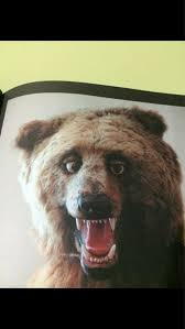 Running Bear Meme - my nose is running and i cant feel my toes being a group of poor