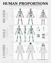 Male And Female Anatomy Differences Human Figure Proportions U2013 Average Figures U2013 Dr Paul Richer Proko