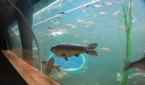 aquarium lakes aquarium wikipedia