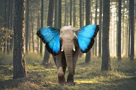 elephant with butterfly ears other randoms butterfly
