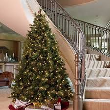 awesome picture of best tree brands fabulous homes