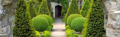English Box Topiary - topiary for english gardens ideas u0026 advice big plant nursery