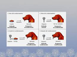 conductismo animal pavlov conductismo