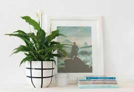 peace lily plant care and growing tips apartment therapy