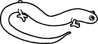 amphibian coloring pages funycoloring