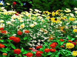 beautiful flower gardens flowers heaven most beautiful flowers