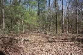 Arkansas Forest images Arkansas woods arkansas forest retreat ar 3 photos jpg