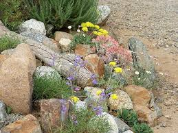 native plant nursery for san diego los angeles and the rest of