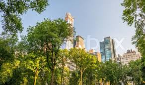 New York vegetaion images Vegetation of central park in manhattan new york city stock jpg