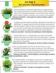 plantes dépolluantes chambre à coucher planète gaïa monde végétal dépollution ces plantes